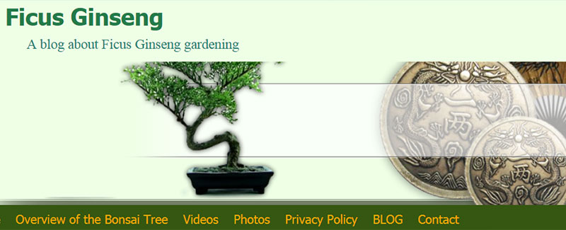 the best blog for ficus ginseng bonsai trees
